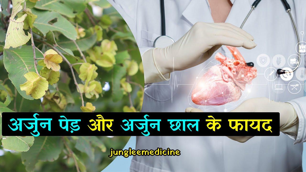 अर्जुन का पेड़ और उसकी छाल के फायदे और नुकसान Benefits of Arjun Tree Bark/  junglee medicine