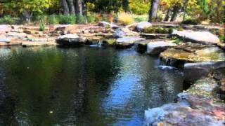 Natural Swimming Pools & Ponds: About