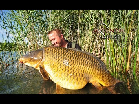 Technique wild common fishing by walt emmanuel youtube for Fish s wild