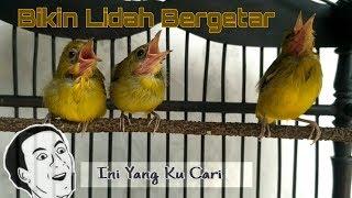Gambar cover Masteran Pleci 2019 (Bikin Lidah Pleci Getar - getar)