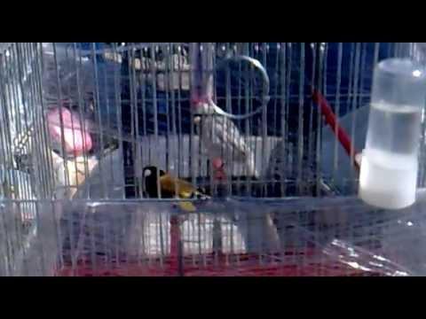 64616519a قرديل عصام جديد 2012.mp4 | FunnyCat.TV