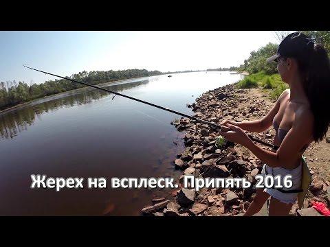 Жерех на всплеск. р. Припять 2016 Беларусь Asp GoPro