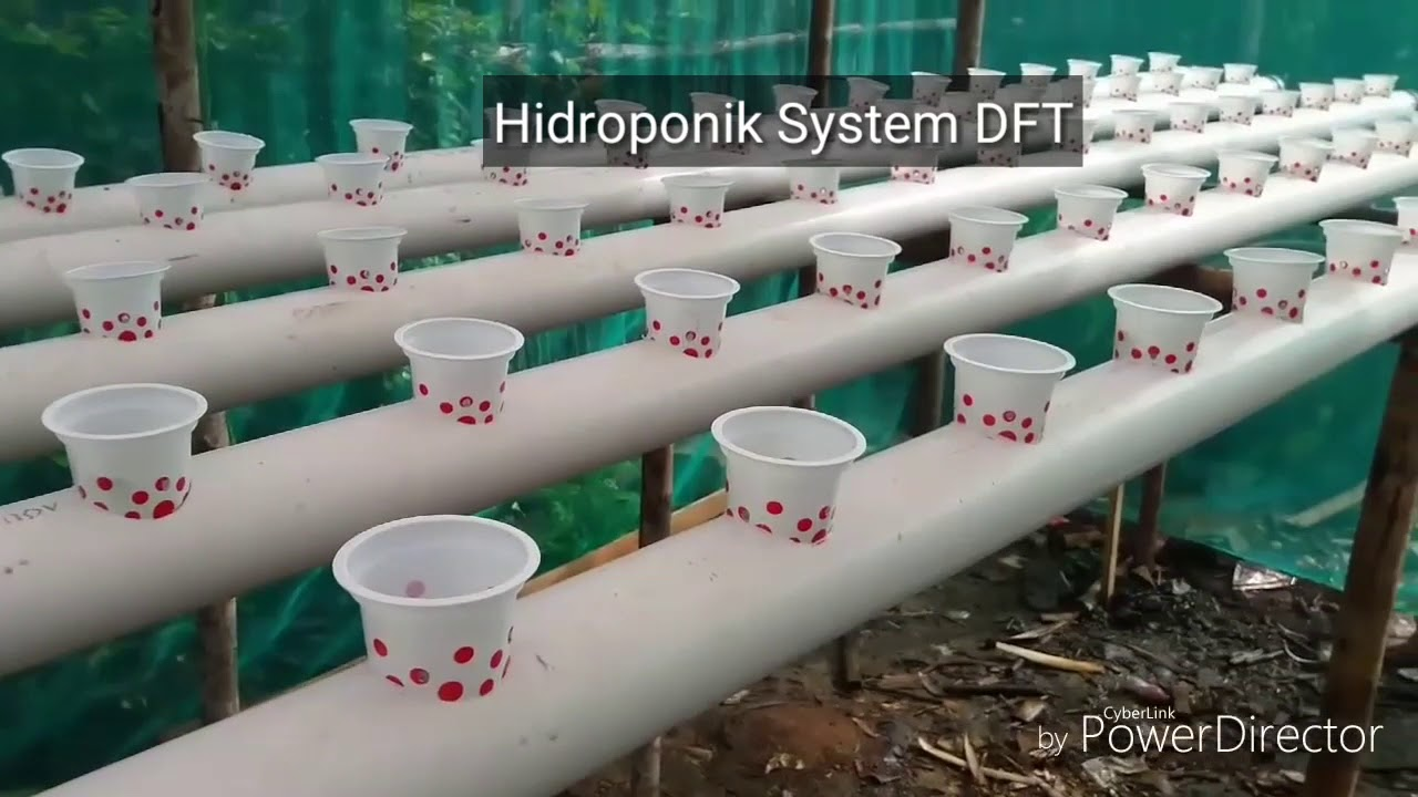 Choose Which Hydroponic System Dft Or Nft Youtube