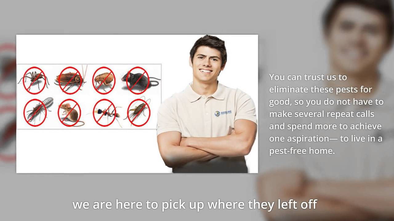 Beeline Pest Control Denver Reviews
