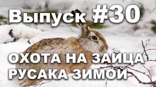 Выпуск 30: Охота на зайца русака зимой онлайн видео 2013