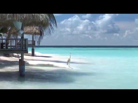 Отель Banyan Tree Maldives Vabbinfaru 5*, МАЛЬДИВЫ, Мале Атоллы (бронь, туры, отзывы)
