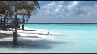 Отель Banyan Tree Maldives Vabbinfaru 5*, МАЛЬДИВЫ, Мале Атоллы (бронь, туры, отзывы)(Туры от туроператора АртТур в отель Отель Banyan Tree Maldives Vabbinfaru 5* вы всегда можете подобрать на странице http://vseonl..., 2015-12-17T01:35:55.000Z)