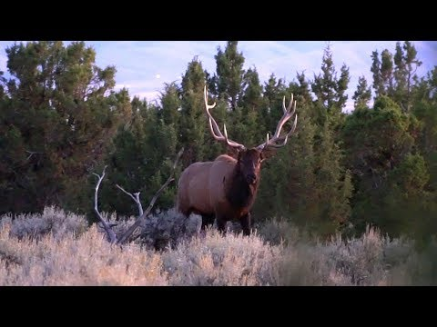 THE FUNNEST DAY OF ELK HUNTING EVER - EP 40 - LAND OF THE FREE