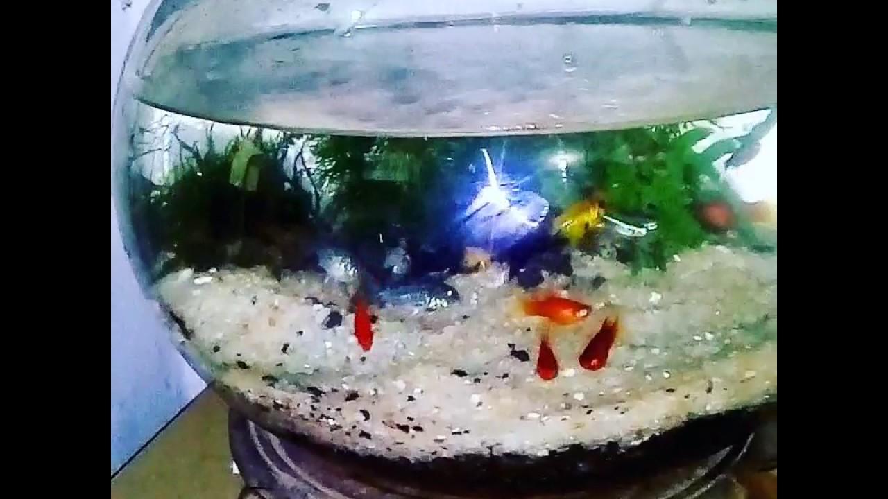 Aquascape Sederhana Aquarium Bulat
