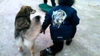 Собака насилует мальчика
