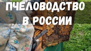 Деревенский пчеловод. Снятие маточника.