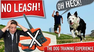 How To Train Your Dog to Be OFF LEASH Without a Shock Collar!