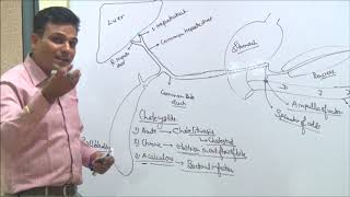 Gastrointestinal System Disorder (Small Introduction) By Tagore Nursing Academy
