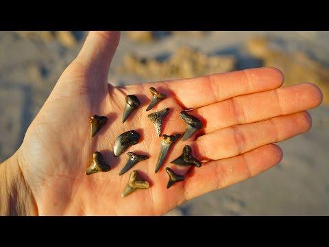 Searching For Prehistoric Shark Teeth!!   Beach Treasure Hunting