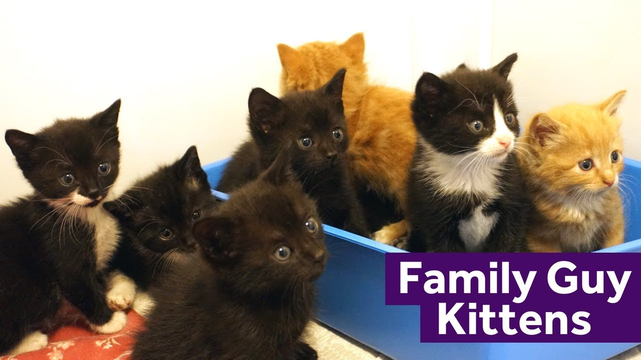 Two Rescue Cat Mums Raise Eight Kittens To her