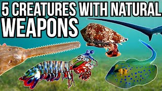 5 Marine Creatures With The Best Natural Weapons