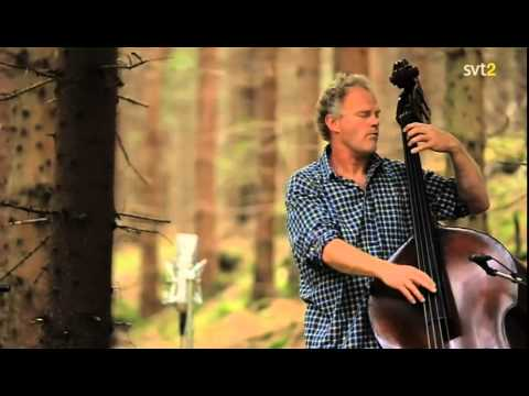 Bobo Stenson Trio - Live in the Forest, 2009