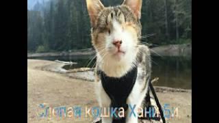 Самые известные коты !!!!!!