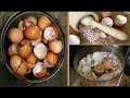 Use Eggshells to Eliminate Pain Bone and Joint, Grow Hair and Nails