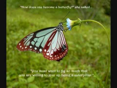Beautiful Butterfly Quotes To Inspire You Youtube