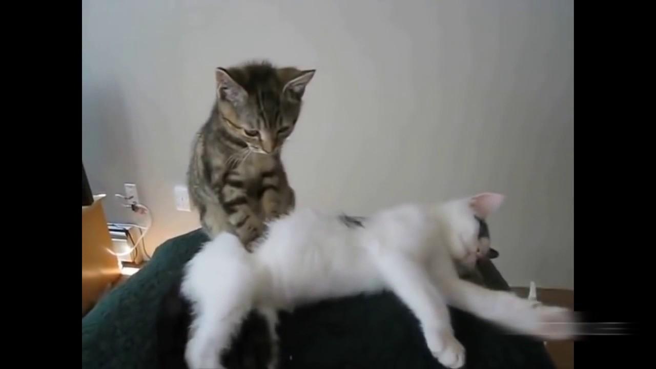 Пушка Пушок кошка делает массаж лапками что это значит касается дверей, которым