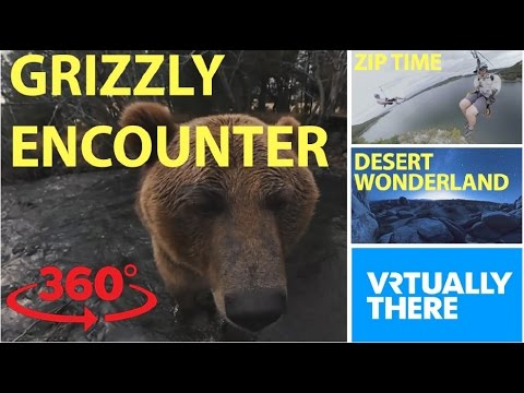 An adorable encounter with a grizzly bear...