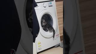 세탁기가 신기한 애기 쿠