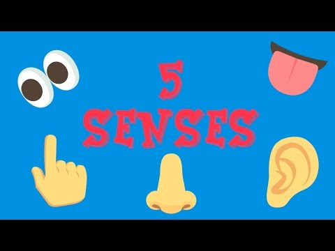 Five Senses -  Can you?