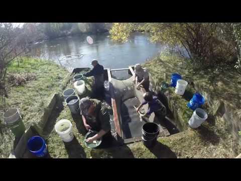 Walleye Rearing Pond Harvest - Michigan DNR