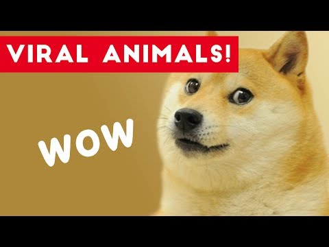 Viral Pets of Facebook and Instagram 2017 | Funny Pet Videos