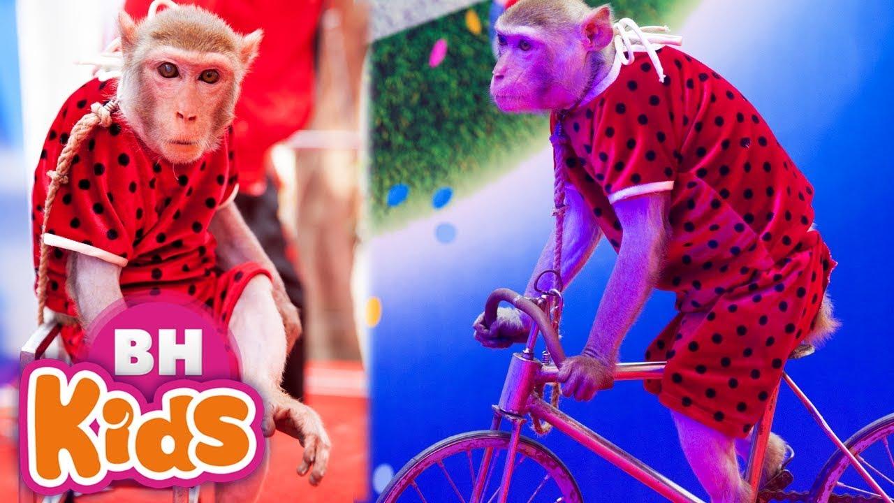 Con Khỉ - NHẠC THIẾU NHI VUI NHỘN - Bố Là Tất Cả, Đàn Gà Con