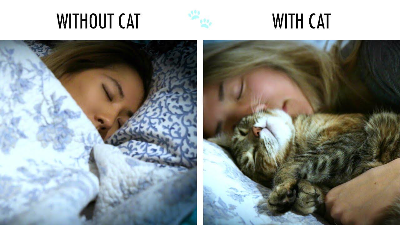 With cat photos 73