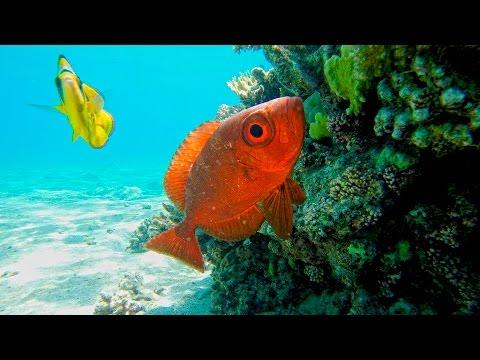 Природа Красного моря [Египет Шарм-Эль-Шейх]