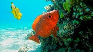 Природа Красного моря [Египет Шарм-Эль-Шейх](Природа Красного моря [Египет Шарм-Эль-Шейх] Sharm El Sheikh Egypt., 2016-10-03T17:37:59.000Z)