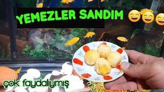 aquarium cleaning, aquarium fish, Fish species,cichlid birth,Cichlid Aquarium,cichlid