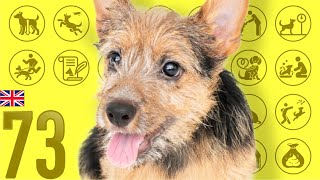 Norwich Terrier❤Cute and Funny Dog breed videos