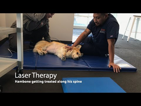 Hambone in Laser Therapy and Warm Up
