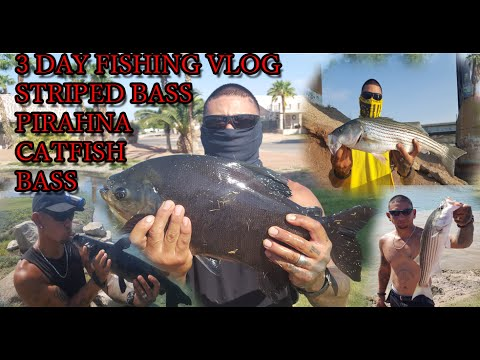 FISHING FOR MULTI SPECIES IN ARIZONA CAUGHT A PIRANHA AN OTHER FISH 3 DAY VLOG