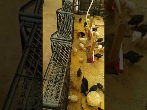 Konya da solucan ve solucan gübresi üretimi EL ELE VERMİKOMPST