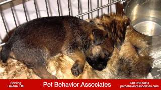 Pet Behavior Associates - Dog Training In Galena, Oh