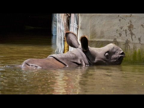 Assam Flood : Kaziranga National Park loses 218 animals | Oneindia News