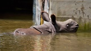 Assam Flood : Kaziranga National Park loses 218 animals | Oneindia News