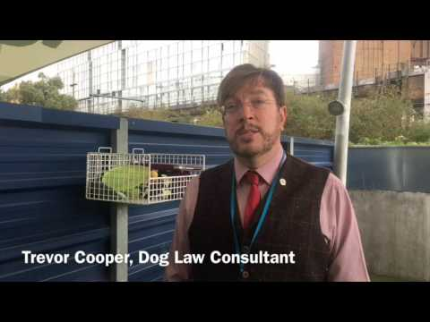 Battersea Dogs and Cats Home discuss importance of legislation regarding animal welfare