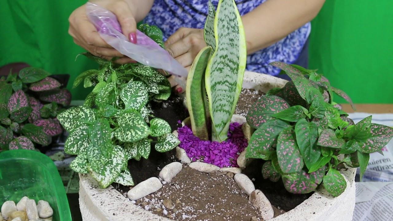 Jardinería Ideas Para Decorar Macetas O Tiestos Con Plantas Y Piedras Liclonny
