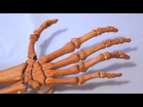 Wood Skeleton Hand -- Finger Cord Test