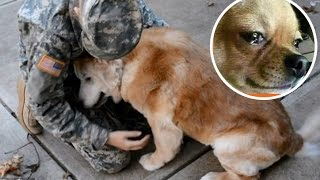Dogs meet their owners after long time  2016 compilation ★TRY NOT TO CRY | HoBo- Animals