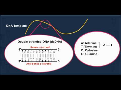 polymerase-chain-reaction-(pcr-)