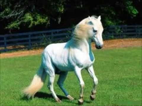 Gino Vannelli Wild horses (audio HQ)