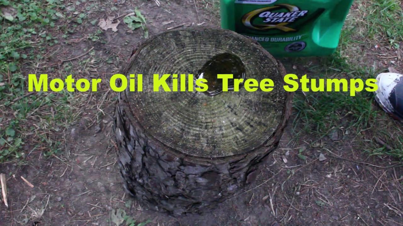 Tree Stump Killer How-to Use Motor...