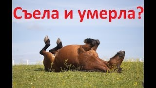 От чего съеденного лошадь может умереть?(Лошадь что-то съела и умерла? Так ли это и будет ли лошадь есть то, что для неё смертельно опасно., 2016-10-03T06:00:02.000Z)